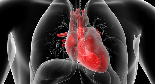 Servicios cardiovasculares